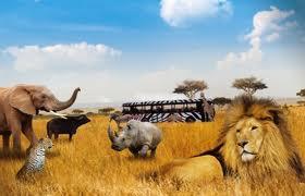 korting tickets safaripark beekse bergen